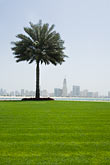 sharjah stock photography | United Arab Emirates, Sharjah, Harbor and City Skyline, palm tree in foreground, image id 8-730-299