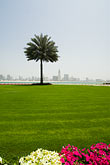 sharjah stock photography | United Arab Emirates, Sharjah, Harbor and City Skyline, palm tree in foreground, image id 8-730-301