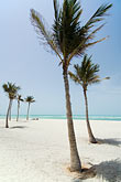 east beach stock photography | United Arab Emirates, Ajman, Beach and Palms, Arabian Gulf, image id 8-730-323