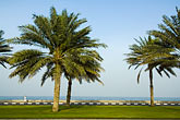 green stock photography | United Arab Emirates, Fujairah, Palm trees along waterfront, image id 8-730-427