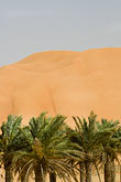 vertical stock photography | United Arab Emirates, Abu Dhabi, Sand dunes and palms at desert oasis, image id 8-730-9751