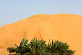 sand dunes and palms at desert oasis stock photography | United Arab Emirates, Abu Dhabi, Sand dunes and palms at desert oasis, image id 8-730-9753