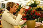 horizontal stock photography | England, Chelsea Flower Show, Blooms Bulbs, Kelly Milne arranging tulips, image id 3-750-11