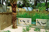 image 3-751-62 England, Chelsea Flower Show, Garden from the Desert, Calligraphy and date palm