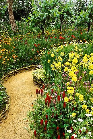 image 3-752-23 England, Chelsea Flower Show, Bonterra Organic Wine Garden, garden path with charlock and red campion