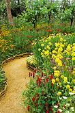 plants in garden stock photography | England, Chelsea Flower Show, Bonterra Organic Wine Garden, garden path with charlock and red campion, image id 3-752-23
