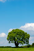 hillside and clouds stock photography | England, Oak tree and clouds, image id 4-900-2174