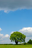 hillside stock photography | England, Oak tree and clouds, image id 4-900-2175