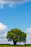 hillside and clouds stock photography | England, Oak tree and clouds, image id 4-900-2178
