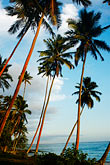blue sky stock photography | Fiji, Beach palms, image id 5-600-2764