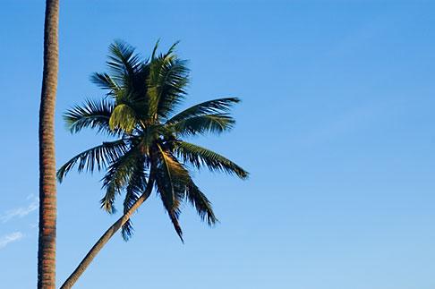 image 5-610-2771 Fiji, Viti Levu, Palms
