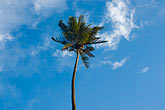 blue sky stock photography | Fiji, Viti Levu, Palm, image id 5-610-2773