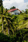 church stock photography | Fiji, Church and palm trees, image id 5-610-9281