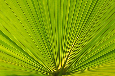 image 5-610-9365 Plants, Palm leaves