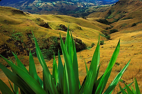 image 9-530-89 Fiji, Hillside, Nausori Highlands