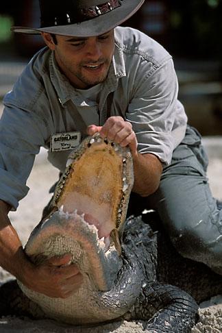 image 2-500-49 Florida, Orlando, Gatorland, Alligator wrestling