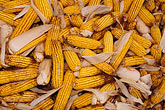 seedling stock photography | Still life, Yellow corn cobs with husks, image id 4-408-7