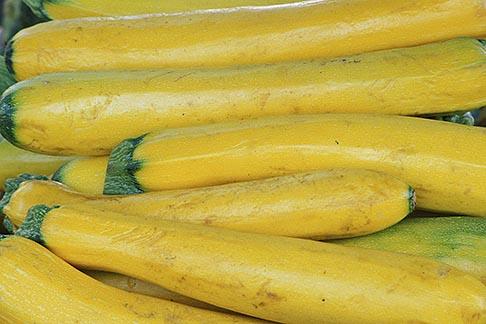 image 5-357-30 Food, Yellow squash