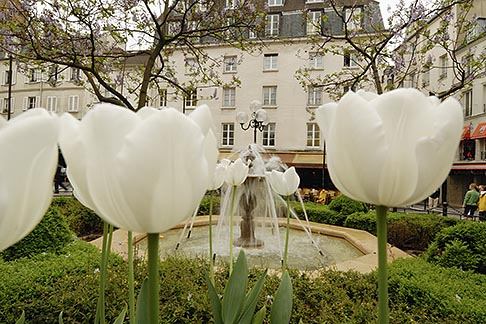 image 6-450-114 France, Paris, Place de la Contrescarpe, Tulips