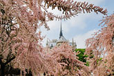blossom stock photography | France, Paris, Cath�drale Notre Dame de Paris, image id 6-450-224