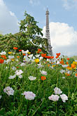 focus on foreground stock photography | France, Paris, Eiffel Tower and garden, image id 6-450-252