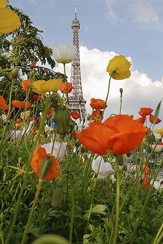 image 6-450-256 France, Paris, Eiffel Tower and garden