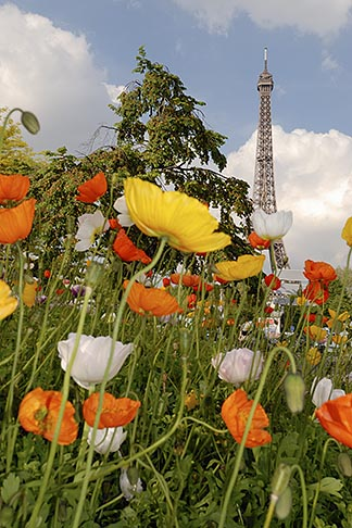 image 6-450-264 France, Paris, Eiffel Tower and garden