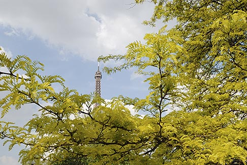 image 6-450-269 France, Paris, Eiffel Tower with trees and blossoms
