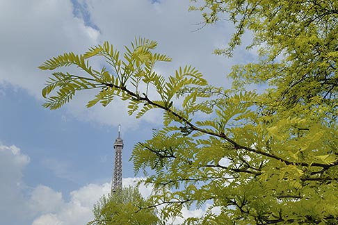 image 6-450-271 France, Paris, Eiffel Tower with trees and blossoms