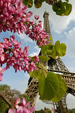 blue sky stock photography | France, Paris, Eiffel Tower and blossoms, image id 6-450-306