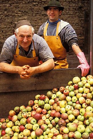 image 5-538-16 Germany, Frankfurt, Applewine makers
