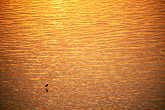 gold stock photography | India, Goa, Morning light, Mandovi River, image id 0-608-74