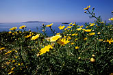 mediterranean sea stock photography | Greece, Attica, Vouliagmeni, Shoreline wildflowers, image id 3-670-5