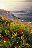 golden light stock photography | Greece, Hydra, Wildflowers on the coast, image id 3-700-83