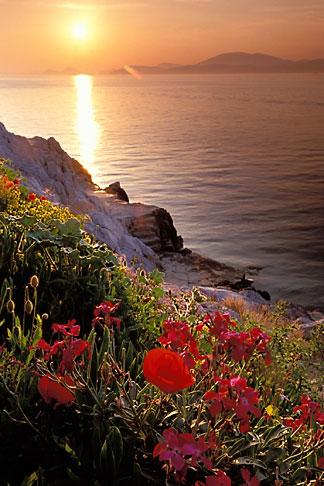 image 3-700-84 Greece, Hydra, Wildflowers on the coast
