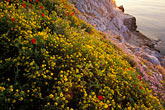 golden light stock photography | Greece, Hydra, Wildflowers on the coast, image id 3-700-88