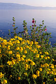 mediterranean sea stock photography | Greece, Hydra, Wildflowers on the coast, image id 3-701-43