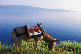 saddle stock photography | Greece, Hydra, Donkey, standard transport on the island, image id 3-702-2