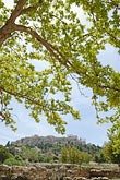 view from below from the old agora stock photography | Greece, Athens, Acropolis, view from below from the old Agora, with tree, image id 7-640-5071