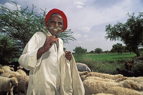 image 7-354-7 India, Rajasthan, Shepherd with sheep