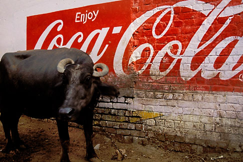 image 7-380-14 India, Agra, Water buffalo and Coca Cola ad
