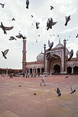 flight stock photography | India, Delhi, Jama Masjid, image id 7-389-16