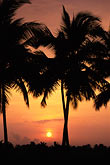 coconut stock photography | India, Kerala, Sunrise, coastal backwaters, image id 7-55-8