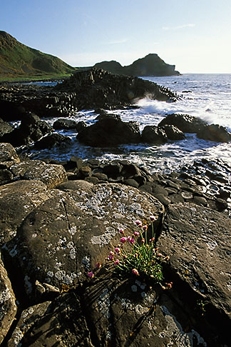 image 4-750-27 Ireland, County Antrim, Giants Causeway