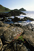 bluff stock photography | Ireland, County Antrim, Giant