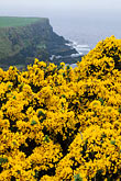 shrub stock photography | Ireland, County Antrim, North Antrim Cliff Path at Giant