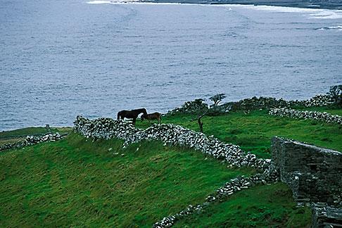 image 4-752-41 Ireland, County Clare, Doolin, Farm by the sea