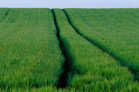 image 4-753-44 Ireland, County Louth, Green field with tracks