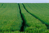 plantation stock photography | Ireland, County Louth, Green field with tracks, image id 4-753-44