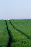 horizon stock photography | Ireland, County Louth, Green field with tracks, image id 4-753-46